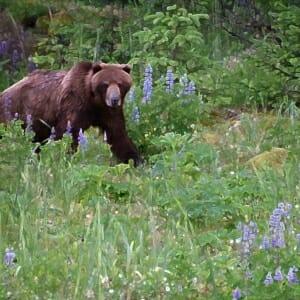 #2010 – Solstice Bear Comes Calling